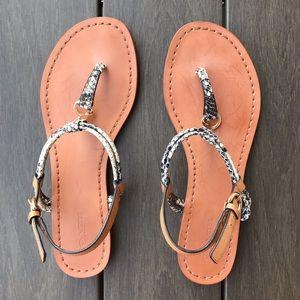 COACH Charleen T-Strap Flat Sandals Snake Print 6